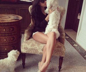 fashion, puppy, and cute image