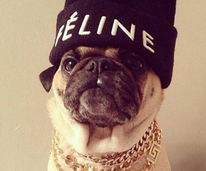 dog, celine, and swag image