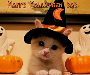 Halloween, kitty, and trick or treat image