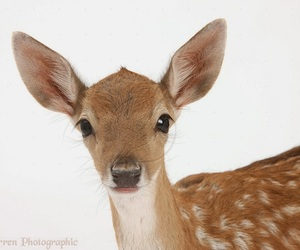 adorable, wild life, and animal image