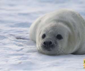 seals, snow, and cute image