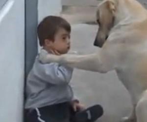 child, dog, and labrador retriever image