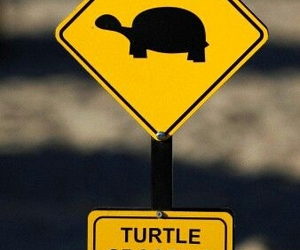 animals, sweet, and turtle image
