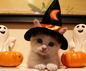 beautiful, cat, and Halloween image