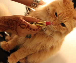 cat and lipstick image