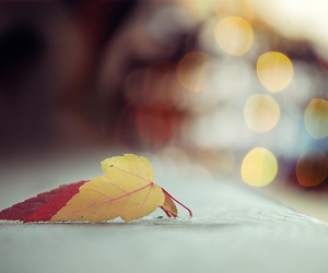 bokeh, colorful, and leaves image