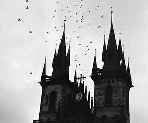 bird, black and white, and castle image