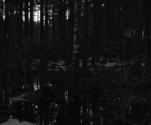 dark, forest, and scary image