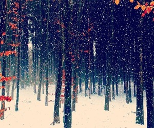 autumn, snow, and fall image