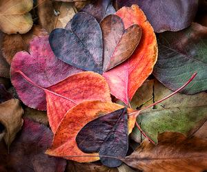 inspiration, magic, and autumn image