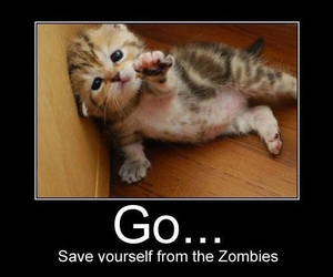 cat, funny, and quotes image