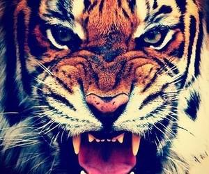 roar and tiger image