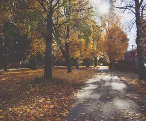 autumn, photo, and Sunny image