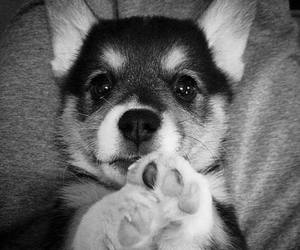 baby dog, photography, and pretty image
