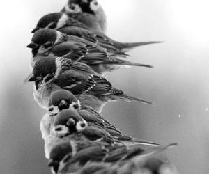 bird, sparrow, and animal image