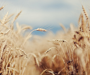 nature, photography, and field image