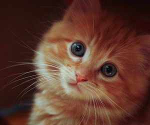 cat, adorable, and animals image