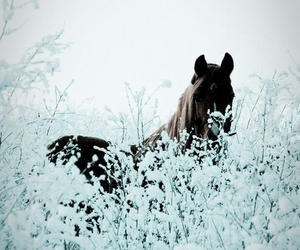 horse, winter, and snow image
