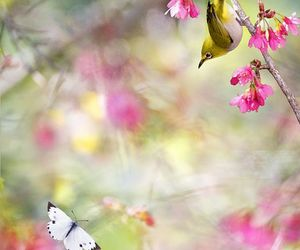 beautiful, birds, and butterfly image