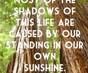 quotes, shadows, and sunshine image