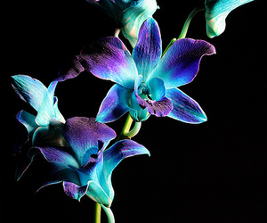 blue, orchid, and flower image