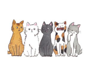 cute and cats image
