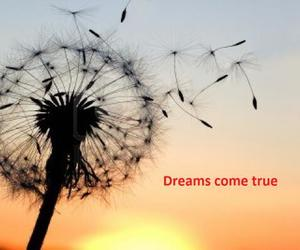 wind, dreams, and wishes image