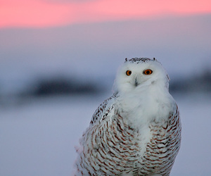 bird, wildlife, and blue image