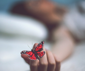 butterfly and red image