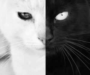 balck and white, love, and cat image