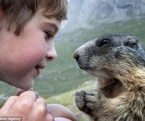 marmotte image