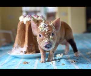 cake, love, and pig image