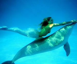 mermaid, dolphin, and ocean image