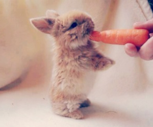 bunny, fluffy, and carrots image
