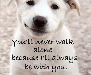 dog and quotes image