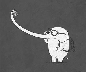 elephant, selfie, and photo image