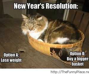funny, cat, and new year image