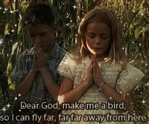 bird, fly, and gump image