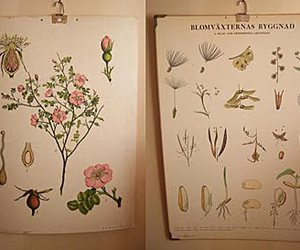 flower, poster, and educational poster image