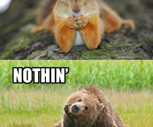 bear, squirrel, and funny image