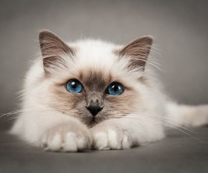blue, soft, and white image