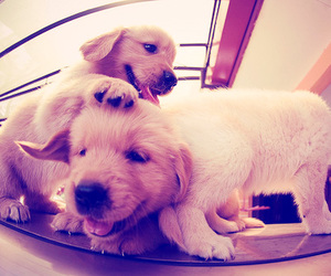 animals, dogs, and cutie image