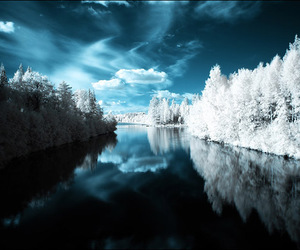 amazing, blue, and forest image