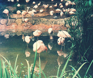 vintage and flamingoes image