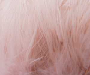pink, feather, and hair image