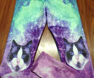 cat, fashion, and leggings image