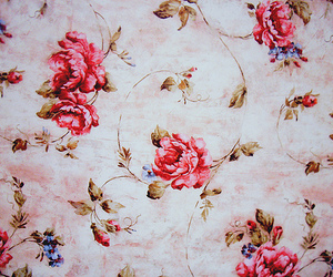 rose, flowers, and floral image