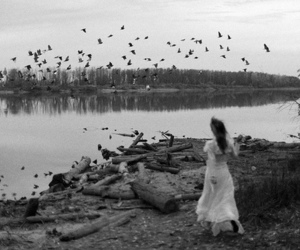 black and white, birds, and girl image