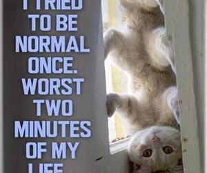cat, funny, and normal image