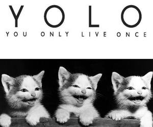 cat, yolo, and funny image